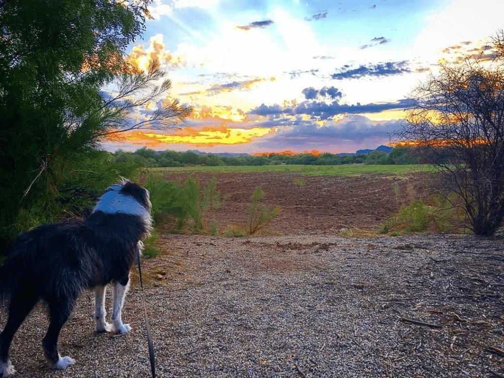 Sunrise at the Riparian Preserve